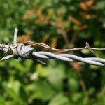 alambre de púas