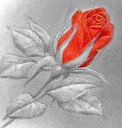 El Milagro de la Rosa