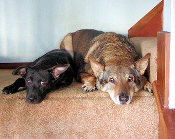 FAQs - Do Pets Go to Heaven? - Cruzer & Rexy in 2003